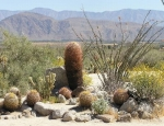 Parco di Anza-Borrego